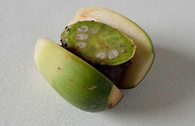 嚼食槟榔的危害有哪些?