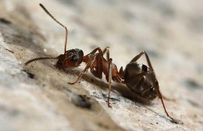 白蚁和蚂蚁的区别