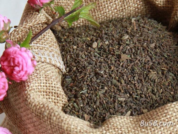 柴胡种子怎么种植?