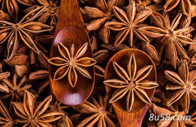 假八角茴香与真八角茴香的区别