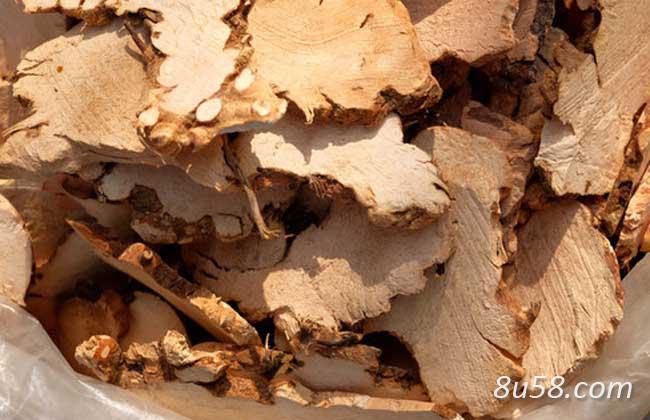 土茯苓能治痛风吗?