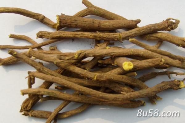 种黄芩赚钱吗?黄芩种植的利润与投资成本及前景预测