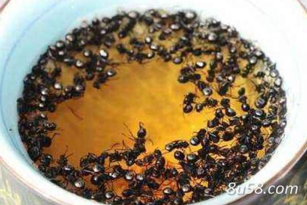 养蚂蚁赚钱吗?蚂蚁养殖的成本和收益及前景分析