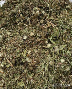 蒲公英适宜在海拔多高的地区种植?
