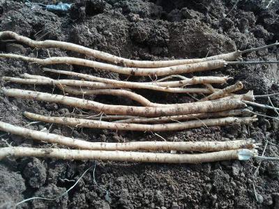 黄芪种植过程中如何追肥?