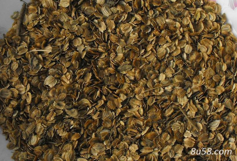 白芷种子多少钱一斤?种植一亩白芷需要多少斤种子?