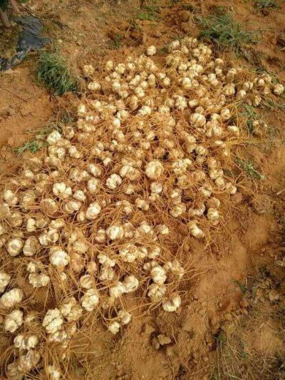 种百合需要什么样的土壤?