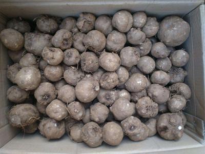 魔芋种植成本与收益及种植前景分析