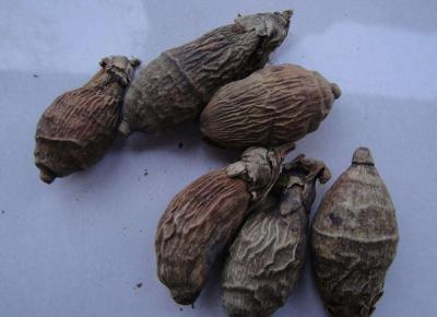 槟榔树黄叶病怎么防治?