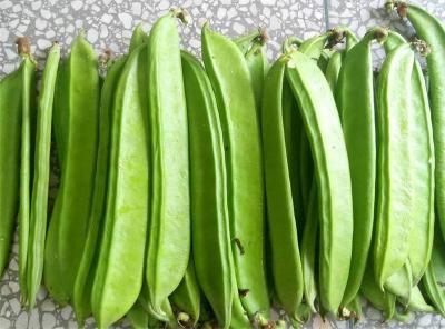 刀豆有什么营养价值?