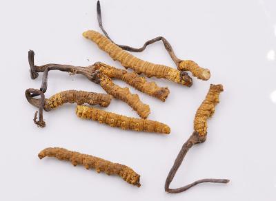 冬虫夏草如何保存?冬虫夏草的保存方法