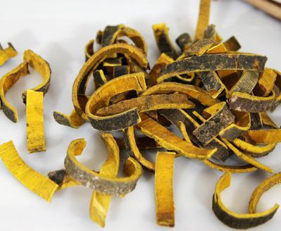 种植黄柏有哪些常见的病虫害?