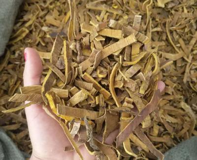 黄柏树什么时候可以采种?
