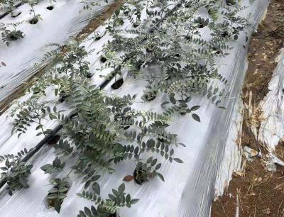 山豆根适宜在什么温度下种植?