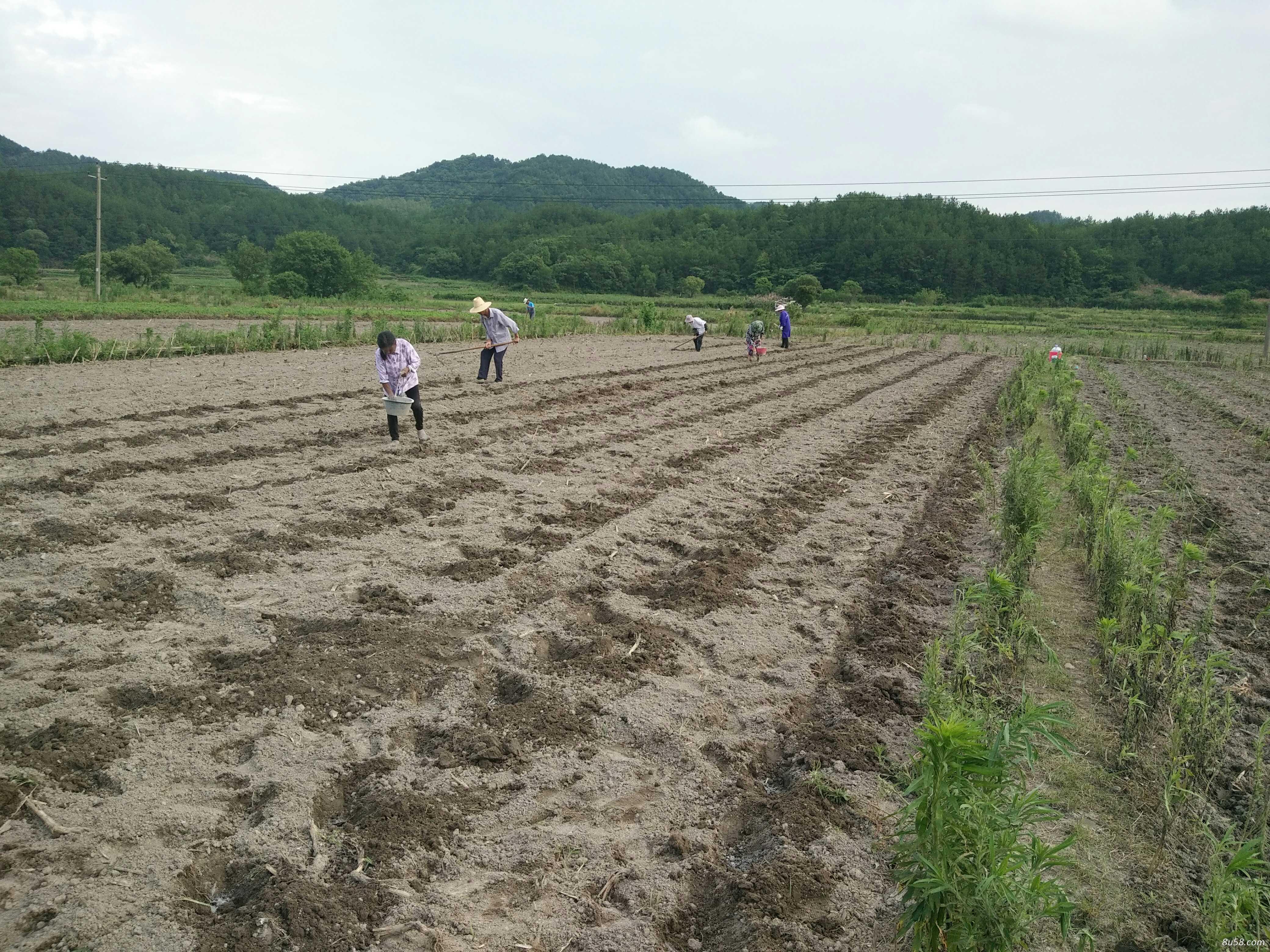 庐山市平兴农作物种植专业合作社