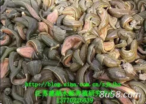 江苏建湖水蛭养殖研究中心