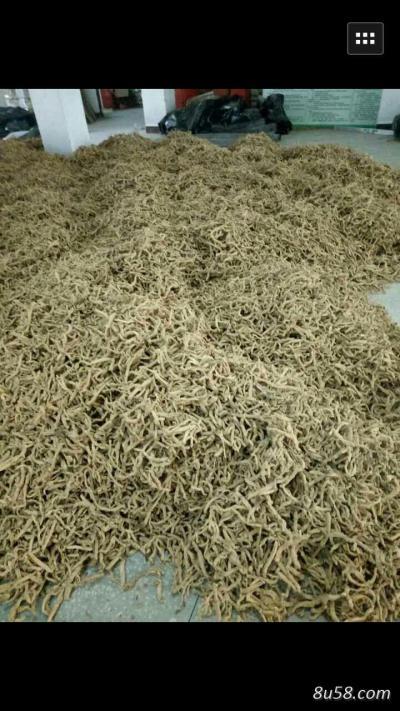 玉竹13吨