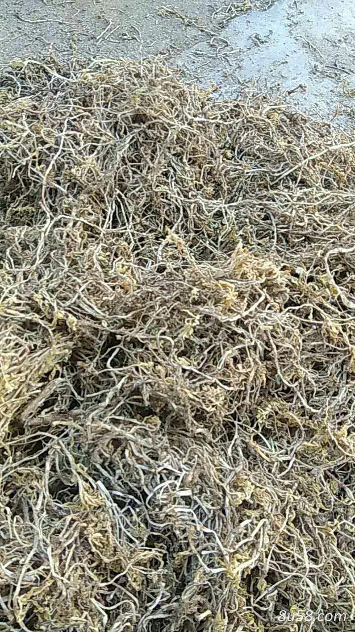 垂盆草10吨