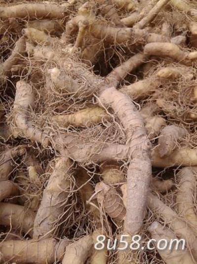 出售鲜玉竹