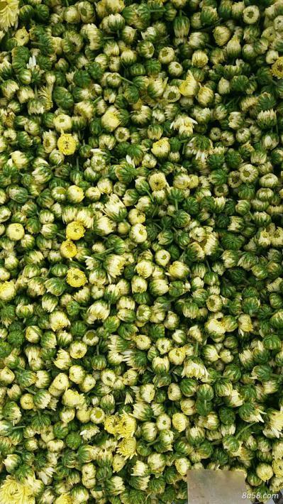 大量供用杭白菊