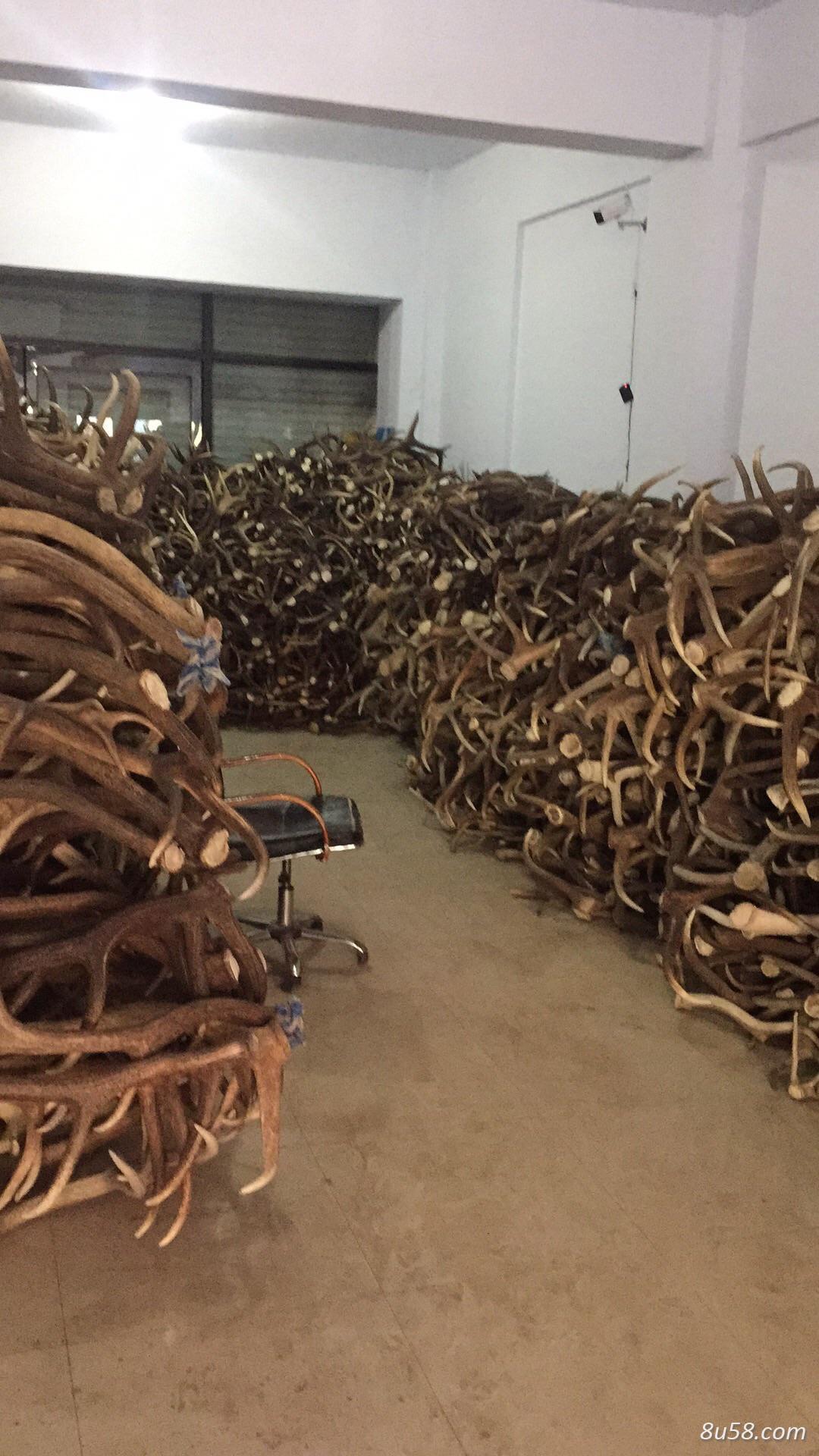 各种鹿角大量出售