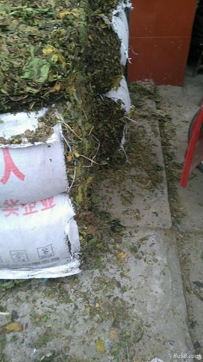 青桑叶 现在有几十吨,还在打包中