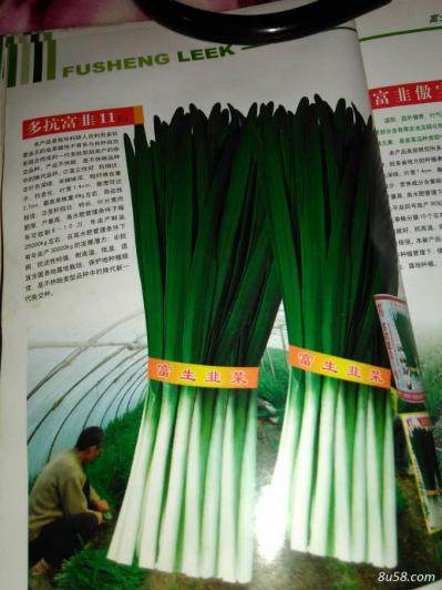 多抗富韭11号  韭菜种