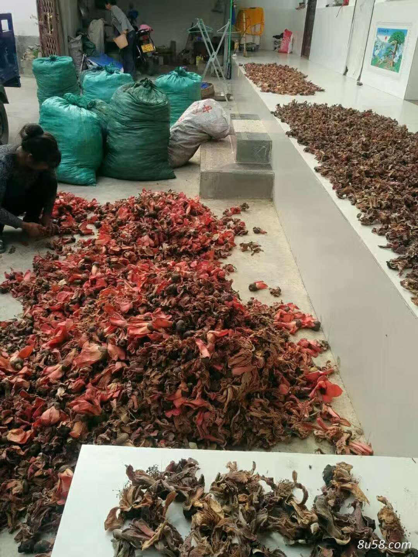 木棉花、攀枝花大量供应优质干货几十吨