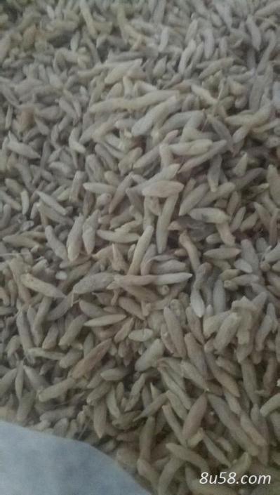供应有硫,无硫麦冬