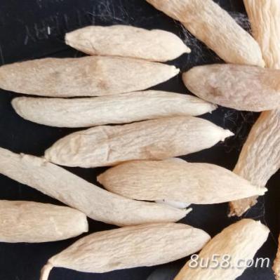 麦冬,麦冬苗,大量出售