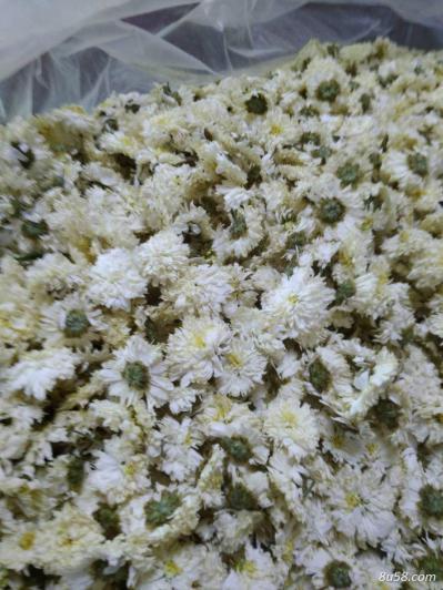 出售自家种植黄山贡菊