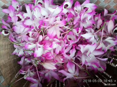 金钗石斛,鲜花