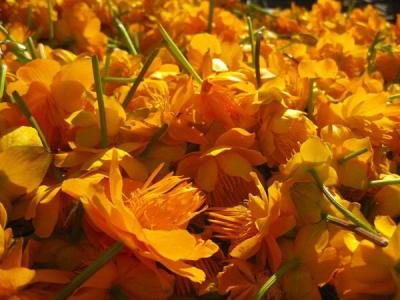 出售大量金莲花
