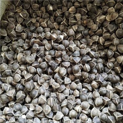 辣木籽产地价格批发零售