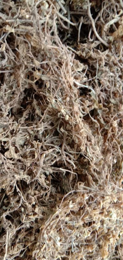 无杂草,无泥全干垂盆草