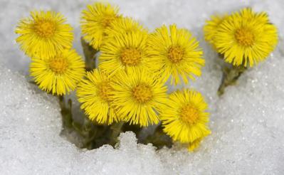 产地批发销售款冬花种子(种根、种苗),提供种植技术,收购产品