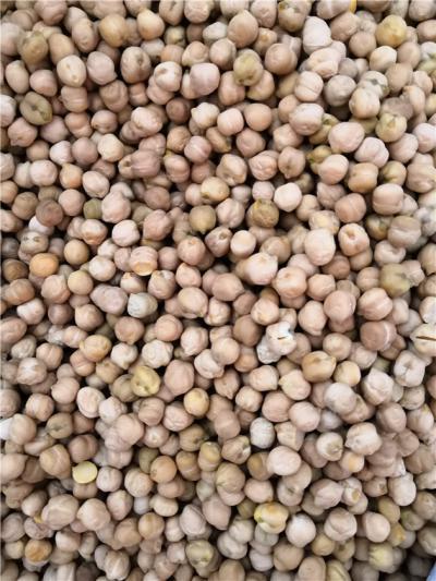 鹰嘴豆产地价格批发零售鹰嘴豆到哪里买