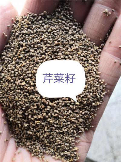 芹菜籽产地价格批发零售芹菜籽到哪里去买
