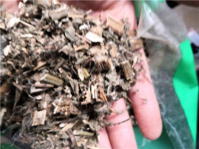 龙戟草产地价格龙戟草多少钱一斤