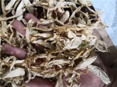 玉簪花产地价格批发零售