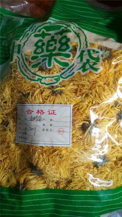 金丝皇菊产地价格批发零售