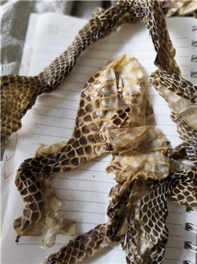 蛇皮产地价格批发零售