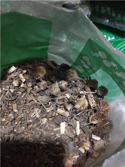 紫锥菊产地价格批发零售