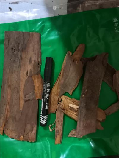红豆杉皮产地价格批发零售