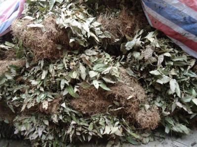 重庆高山野生淫羊藿1000斤供应,货品绝对真开,有假包换