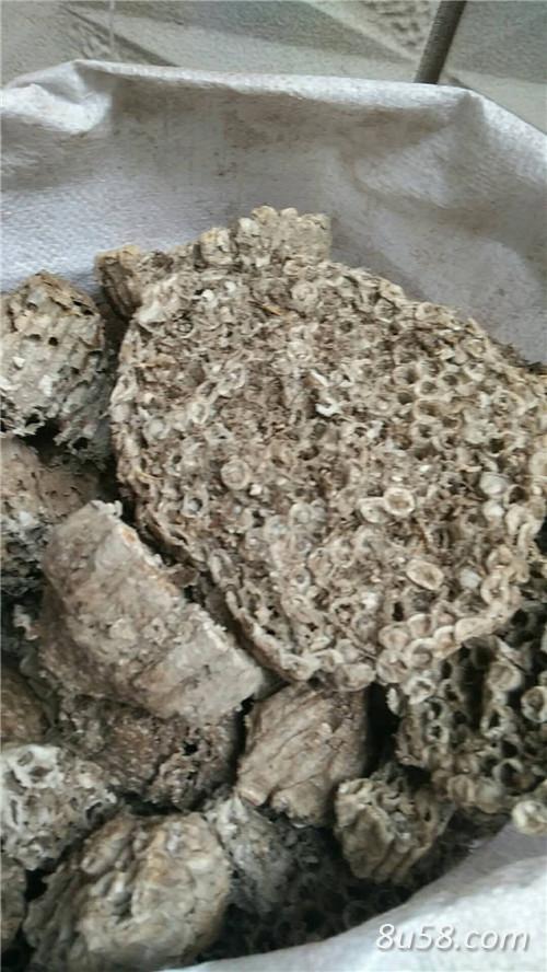 蜂房产地价格批发零售
