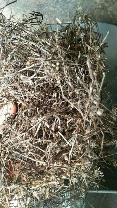 白花蛇舌草产地价格