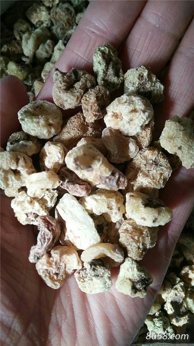 山慈菇产地价格山慈菇作用与功效