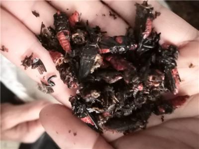 红娘虫产地价格批发零售