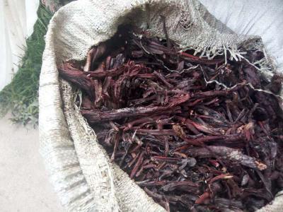 新疆天然软紫草